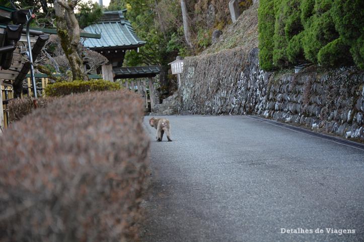 macaco nikko relatos viagem japao roteiro dicas.png