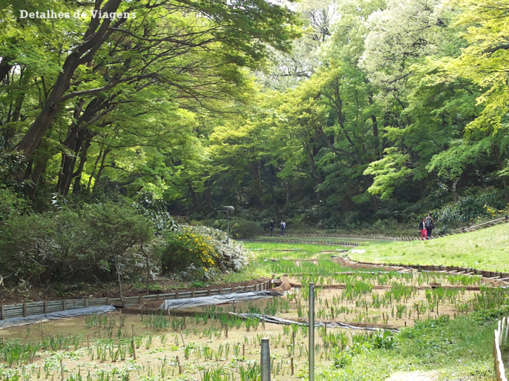 meiji jingu santuario inner garden jardim interior japao roteiro relatos viagem dicas o que fazer toquio 5.png