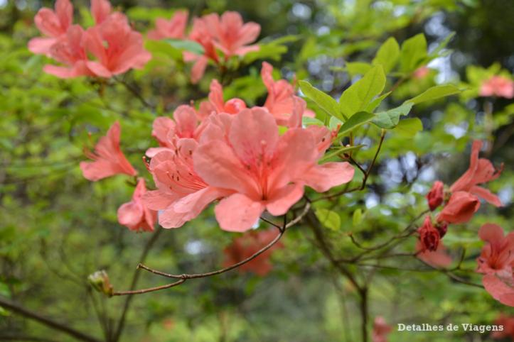 meiji jingu santuario inner garden jardim interior japao roteiro relatos viagem dicas o que fazer toquio 7.png