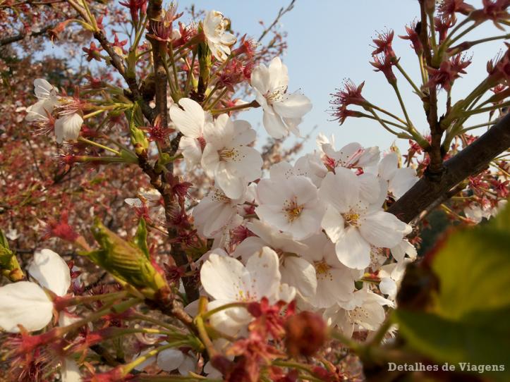 tokyo parque shinjuku gyoen sakura cerejeira toquio relatos viagem japao roteiro dicas.png