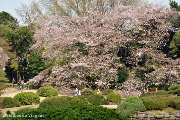 tokyo parque shinjuku gyoen toquio relatos viagem japao roteiro dicas 17.png