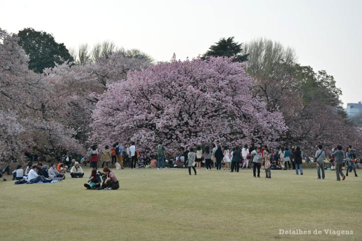 tokyo-parque-shinjuku-gyoen-toquio-relatos-viagem-japao-roteiro-dicas-27
