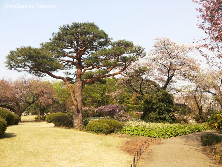 tokyo parque shinjuku gyoen toquio relatos viagem japao roteiro dicas o que fazer em toquio.png