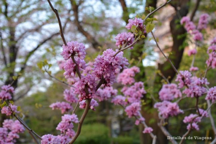 tokyo sumida park relatos viagem toquio japao roteiros dicas 8.png