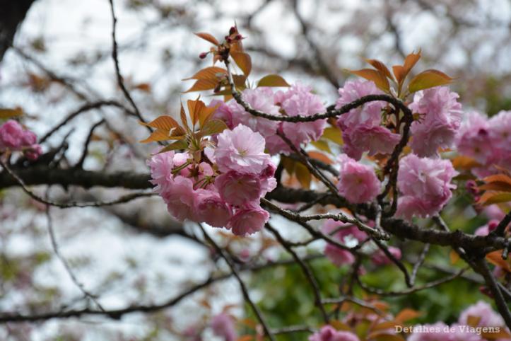 tokyo-ueno-park-relatos-viagem-japao-roteiro-dicas-o-que-fazer-toquio-4