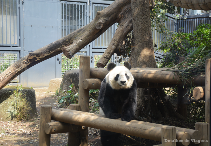 tokyo ueno park zoo panda gigante relatos viagem japao roteiro dicas.png