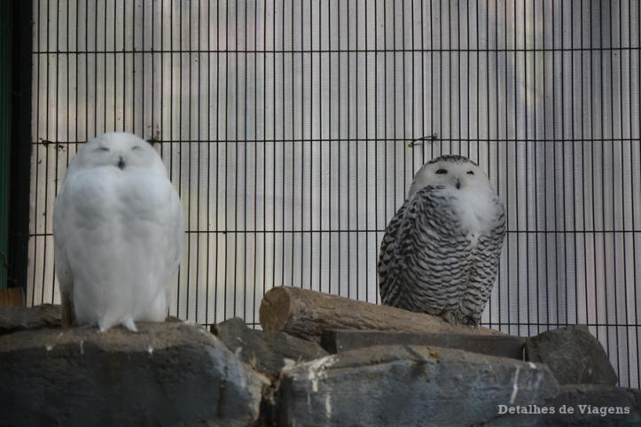 tokyo ueno park zoo relatos viagem japao roteiro dicas 3.png