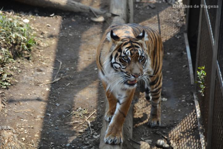 tokyo ueno park zoo relatos viagem japao roteiro dicas 4.png