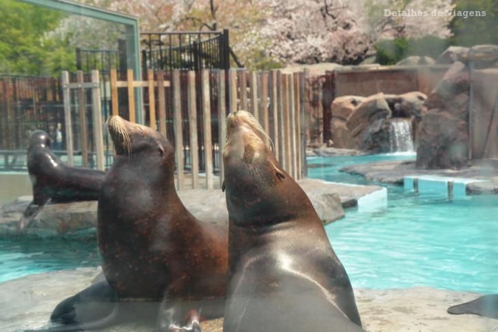 tokyo-ueno-park-zoo-relatos-viagem-japao-roteiro-dicas-7
