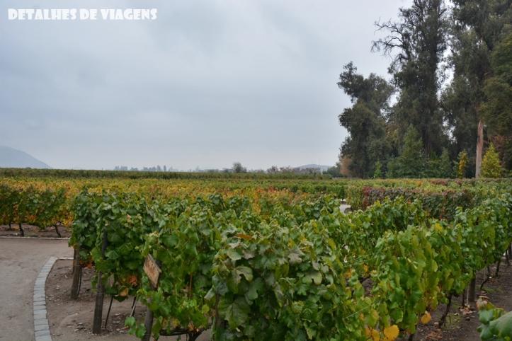 vinicola concha y toro parreiras tour tradicional enoturismo relatos viagem santiago chile 2
