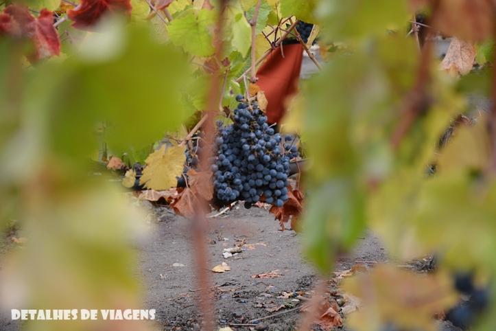 vinicola concha y toro parreiras uvas tour tradicional enoturismo relatos viagem santiago chile 2