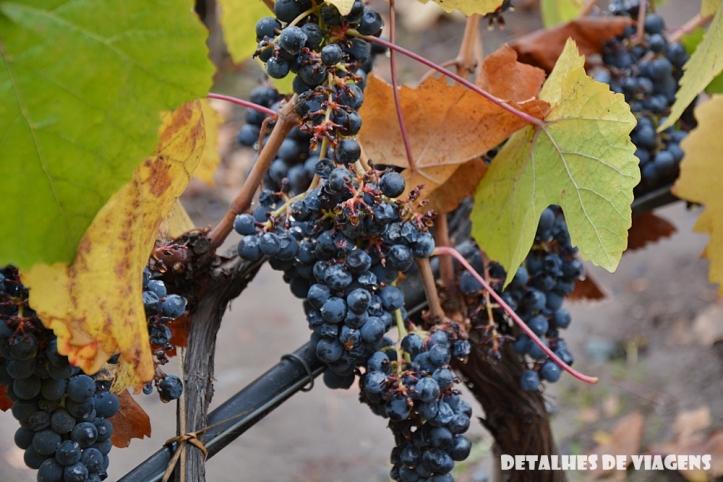 vinicola concha y toro parreiras uvas tour tradicional enoturismo relatos viagem santiago chile