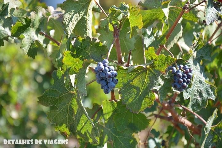 vinicola santa rita chile uvas relatos viagem santiago quais vinicolas visitar