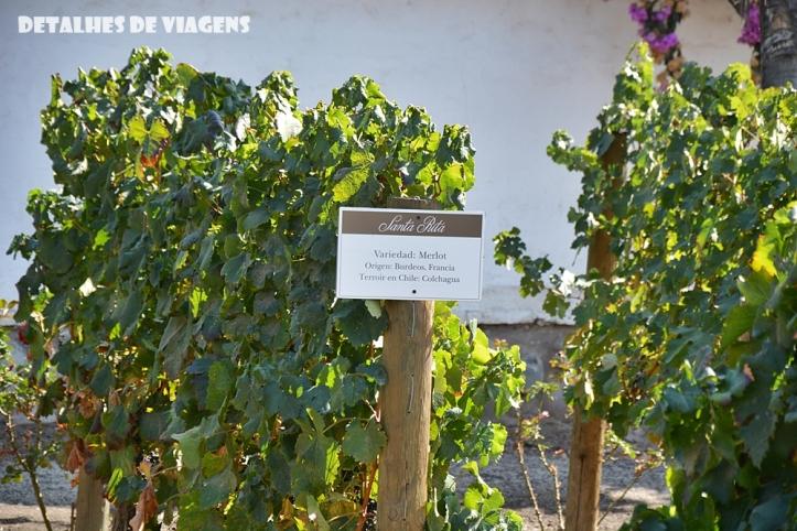 vinicola santa rita chile uvas videiras merlot relatos viagem chile