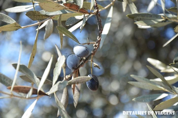 vinicola santa rita oliveiras pe de azeitona pontos turisticos santiago chile o que fazer relatos viagem