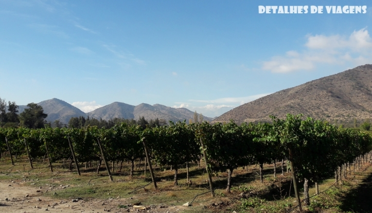 vinicola santa rita plantacao uva vinhedo chile relatos viagem santiago