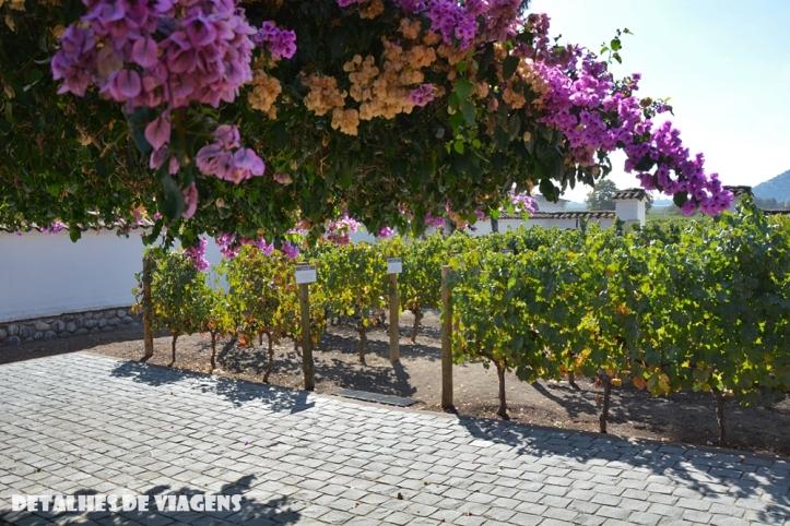 vinicola santa rita tour pontos turisticos santiago chile o que fazer relatos viagem