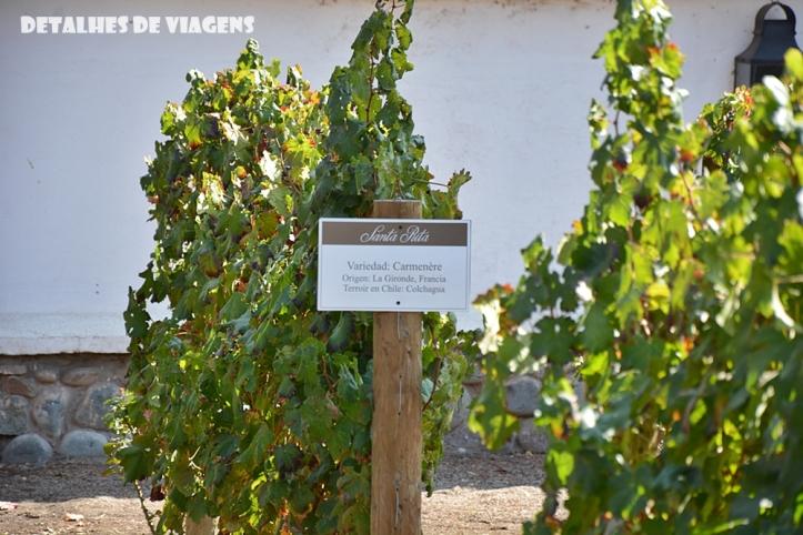 vinicola santa rita uva carmenere chile o que fazer santiago pontos turisticos