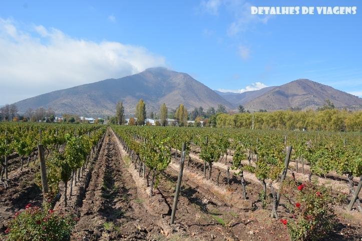vinicola santa rita vinhedos parreiras plantacao uvas pontos turisticos santiago chile o que fazer relatos viagem 2