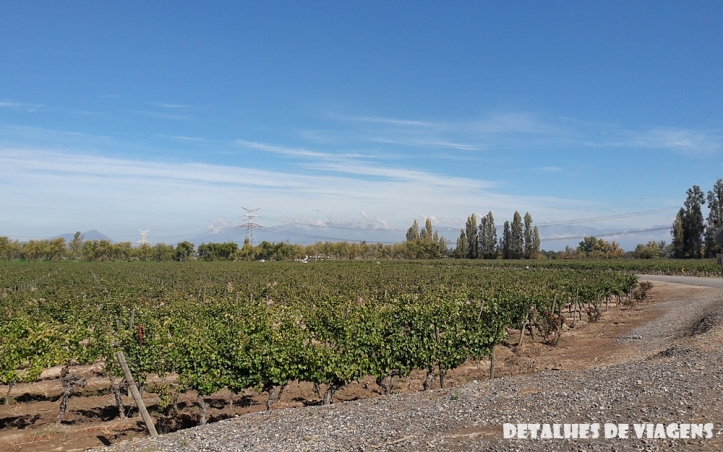 vinicola santa rita vinhedos parreiras plantacao uvas pontos turisticos santiago chile o que fazer relatos viagem 3