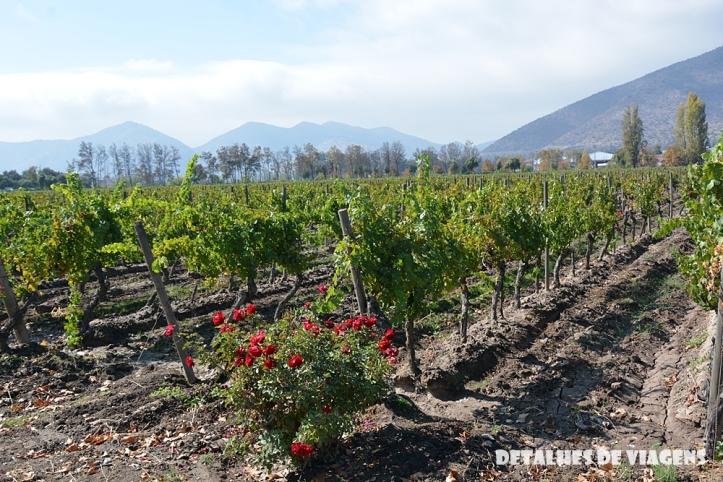 vinicola santa rita vinhedos parreiras plantacao uvas pontos turisticos santiago chile o que fazer relatos viagem